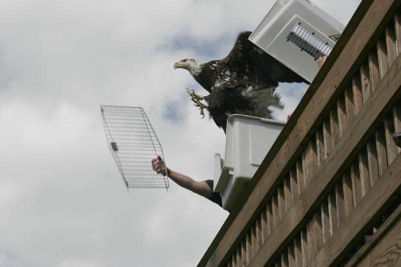 eagle-cage
